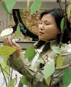 photo of Korean woman writing a message on tree leaf, 2004